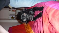 Lochky, chien