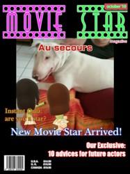 Locky, chien Bull Terrier