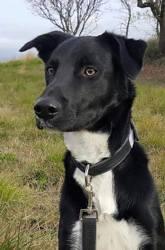 Locky, chien