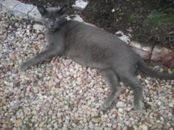 Logan, chat Gouttière