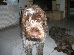 Lola , chien