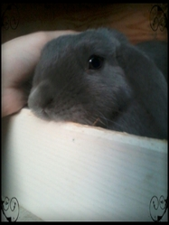 Lola, rongeur Lapin