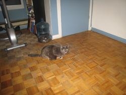 Lola, chat Gouttière