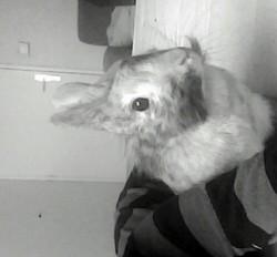 Lola, rongeur