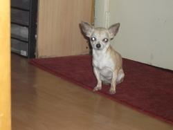 Lolita, chien