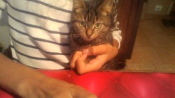Lolly, chat Gouttière