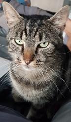 London, chat Gouttière