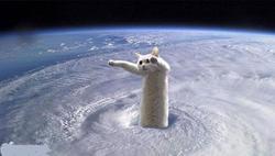 Longcat, chat Ragdoll
