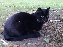 Looky, chat Gouttière