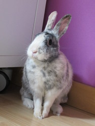 Loona, rongeur Lapin