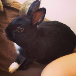 Loopy, rongeur Lapin
