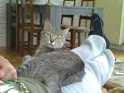 Lorie, chat Gouttière