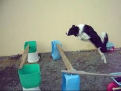 Lorka, chien Border Collie