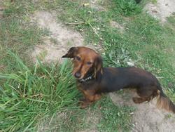 Lou, chien