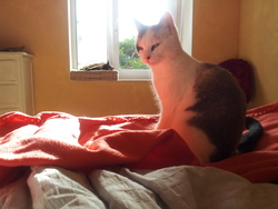 Louisette , chat