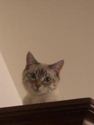 Loukoum, chat Gouttière