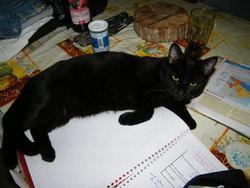 Loola, chat Gouttière