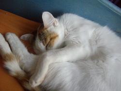Loula, chat