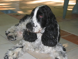 Loulou, chien