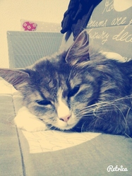 Loulou, chat