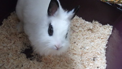Loulou, rongeur Lapin
