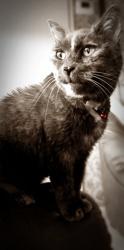Loulou, chat Gouttière