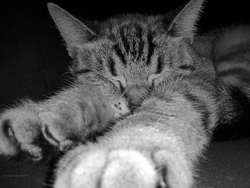 Louloute, chat