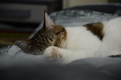 Louloute, chat Gouttière