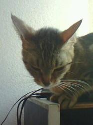 Louly, chat Gouttière