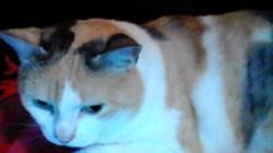 Loumia, chat