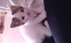 Louna, chaton