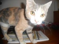 Louna, chat