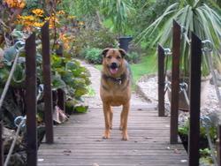 Louna, chien