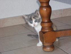 Louna , chat