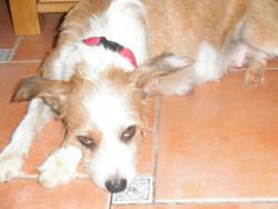 Lounette, chien