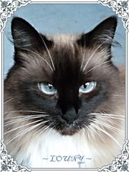 Louny Au Paradis, chat Gouttière