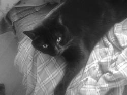 Loup Garou, chat
