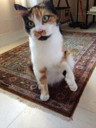 Loupiotte, chat