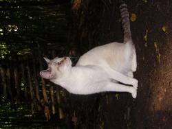 Lourdine, chat