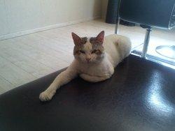 Loustic, chat Gouttière