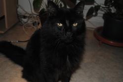 Loustique, chat Gouttière