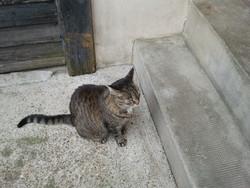 Loutz, chat Gouttière