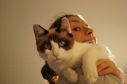 Louxor, chat Siamois