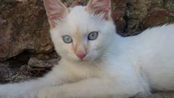 Lovann, chat