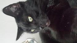 Lover, chat Gouttière