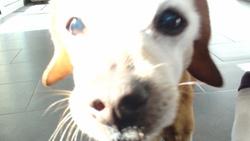 Lubie, chien