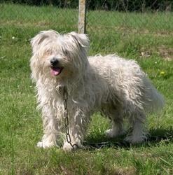 Lucas , chien