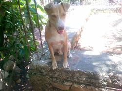 Lucas, chien