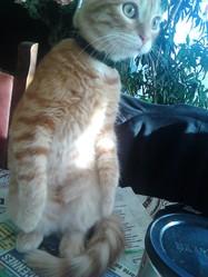 Locath, chat Gouttière