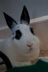 Lucien, rongeur Lapin